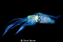 say squid ;-) by Dave Baxter