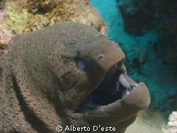 One of my fist underwater photo's, Sharm, Nikon Coolpix 9... by Alberto D'este