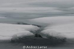 Canada, May 09 by Andres Larraz