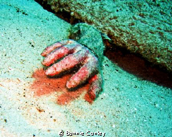 Dead Hand!  I came upon this horror while diving at Grand... by Bonnie Conley