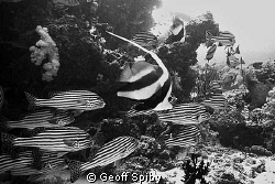 reefscene in black and white by Geoff Spiby