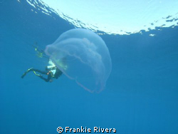Jelly Fish eats my dive buddy!!!!  