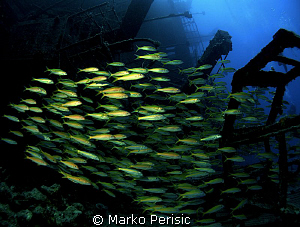 Yellowfin Goatfish make their way through the wreckage of... by Marko Perisic