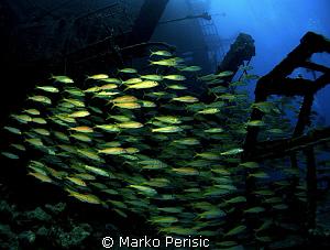 Yellowfin Goatfish make their way through the wreckage of... by Marko Perisic
