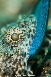 Taken in Lembeh this was the second time in 4 days I had ... by Thomas Ozanne
