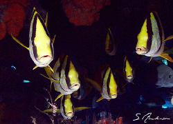 This image was taken in Cozumel a few weeks ago while div... by Steven Anderson