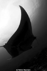 Manta @ Koh Bon in black & white by Patrick Neumann