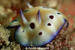 little nudi taken with Canon 400D/Hugyfot + 100mm + Macro... by Patrick Neumann