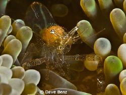 Damned small little shrimp... by Dave Benz