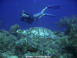 Diving with my good friend & Dive Master, Matthew William... by Mary Carol Fitzgerald