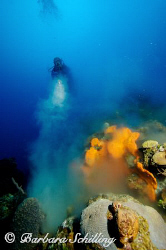 Sponge Volcano ..... by Barbara Schilling