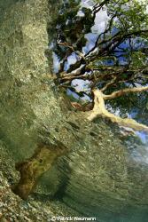 tree half/half taken with Canon 400D/Hugyfot + Fisheye by Patrick Neumann