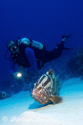 Nassau Grouper with Diver by Barbara Schilling