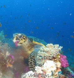 From Youlanda reef in the Red sea.. by Vidar Aas