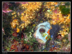 Wonderful colors and biodiversity of the Mediterranean Se... by Bea & Stef Primatesta