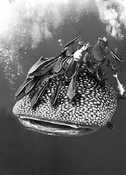 Shark encounter of the first degree..... by Soren Egeberg