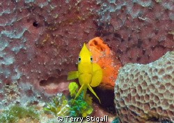 This shot was taken in Cozumel in March 2009.  As I drift... by Terry Stigall