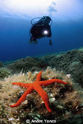 Do you feel like a star ?  :)  Nikon 10.5mm Fish-eye with... by Andre Yanco