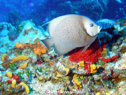 The color is so great - the angel fish is a bonus.  Taken... by Cheri Denn