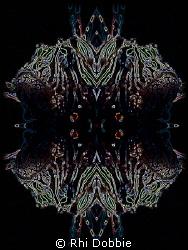 """""""Four Lions"""" - Canon G9 & 1 Inon z240 Strobe. Mirror imag... by Rhi Dobbie"""