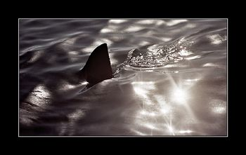 Beware...it's out there!  Dyer Island, South Africs by Johannes Felten