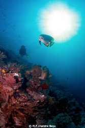 Bat fish - diver..in the morning by M F Chandra Bayu