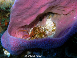 Sponges always hold such amazing critter treasures.  Take... by Cheri Denn