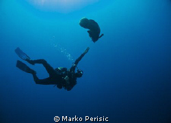 Diver and Napoleon Wrasse Little Brother Island. by Marko Perisic