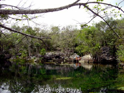That picture was taken in cenote ponde rosa before the cr... by Philippe Duval