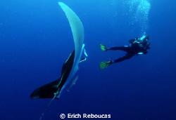 Diver and Manta by Erich Reboucas