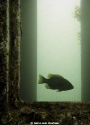 """Captain's Quarters""      A rock bass makes an old wreck ... by Jean-Louis Courteau"