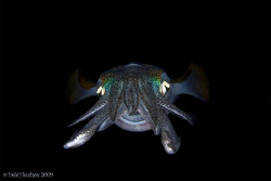 """""""The Smiler"""" This playful squid was definately smiling at... by Debi Henshaw"""