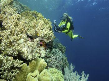 House reef, Wakatobi resort, Indonesia by Leon Joubert