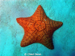 Star of the Sea by Cheri Denn