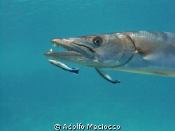 Dangerous jobs...