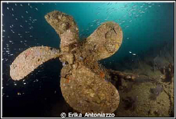Propellor of the Wreck in Koh Lipe by Erika Antoniazzo