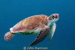Turtle - taken in Bonaire with a Nikon D300 in a sea and ... by John Harrison