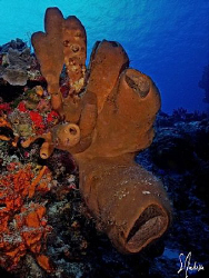 Reef scene at Villa Blanco Wall - Cozumel by Steven Anderson