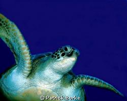 Taken off Cancun by Patrick Burke