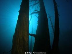 Bosque sumergido Lago Traful , Patagonia Argentina by Enrique Francisco Colombo