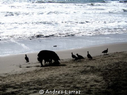 VULTURES AND SWINE @SUNSET by Andres Larraz