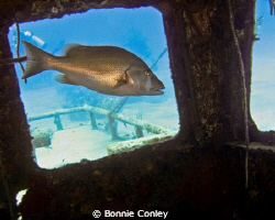Snapper at Grand Bahamas May 2009.  Photo taken with a Ca... by Bonnie Conley