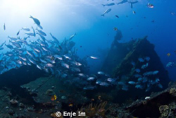jacks over shipwreck.