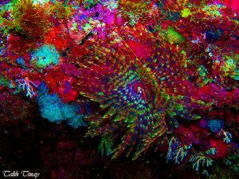 Tube worm by Talih Tinay