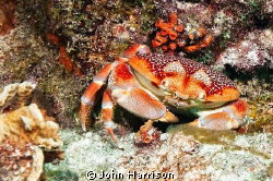 Crab by John Harrison