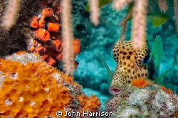 Trunk Fish by John Harrison