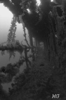 Nikonos V, 12mm fisheye, B&W 400 asa Tmax film in natural... by Michael Grebler