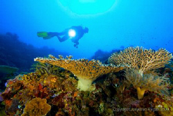 Diver floating by the reef by Jonathan Regan