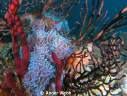 Entwined...so many sponges and corals... by Roger Webb