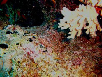 Can you find the Fish!!!! Red Sea Egypt Guta Abu Ramada by Rehab El Gindy